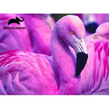 Animal Planet Pink Flamingo Puzzle 63 piece