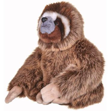 BBC Earth Sloth